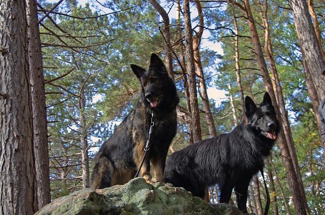 psi v lese