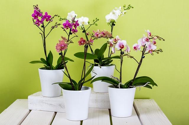 barevné orchideje.jpg
